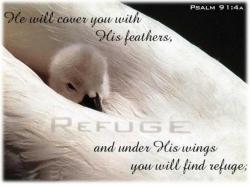 refuge04